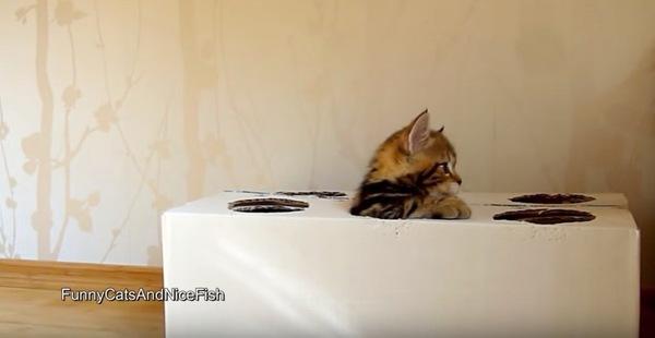 違う方向から顔を出す子猫