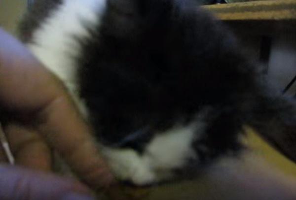 飼い主の手を噛む子猫