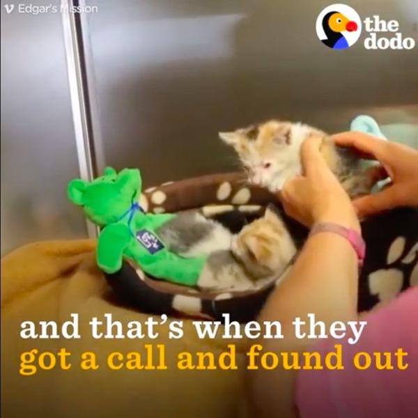 保護施設に移された子猫