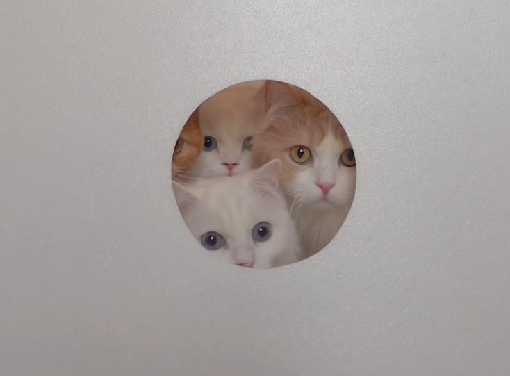 穴から覗く4匹の猫