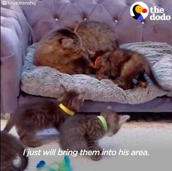 子猫の面倒をみるメイソン