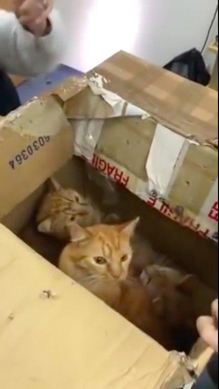 2箱目のダンボールに入っていた猫3匹