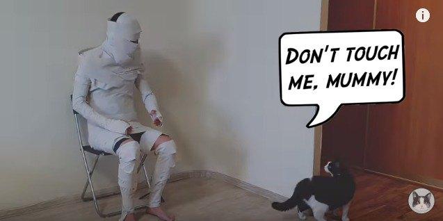 触られて逃げる猫