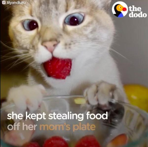 いちごを盗む子猫リリー