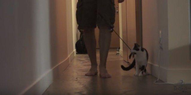 立ち止まり方を教える猫