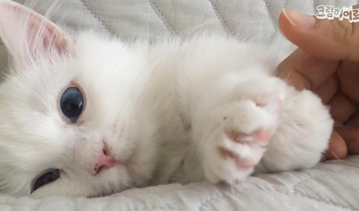 フミフミをする子猫