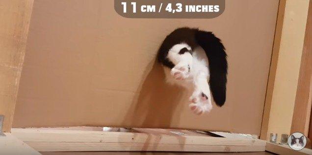 11cmの穴を通る猫