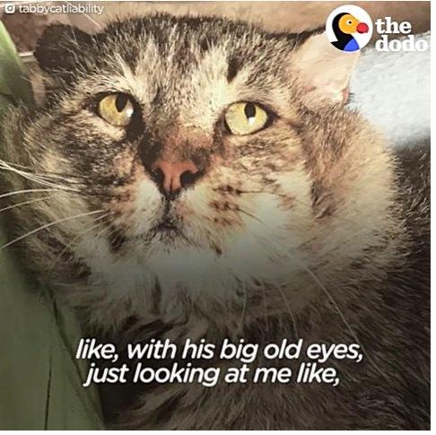 老猫の悲しい顔