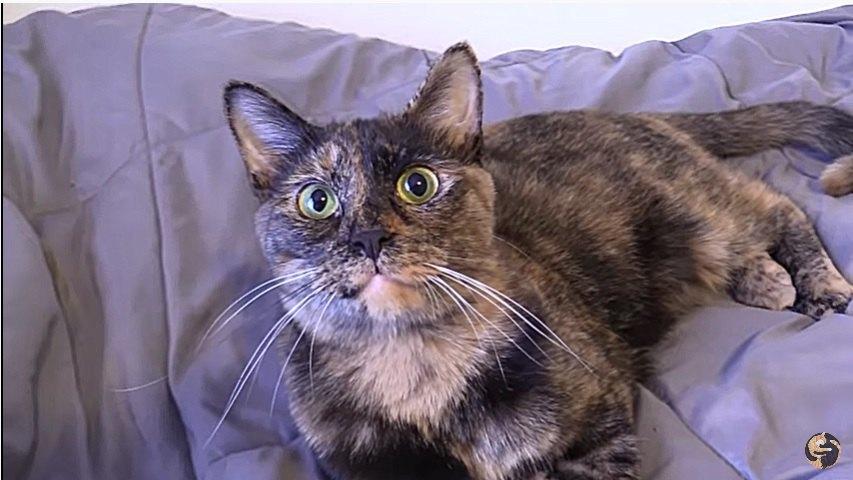 グルルルと鳴く猫