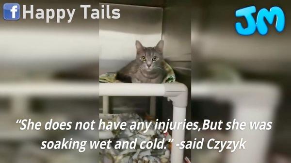 雪の中から救出された猫のウインター