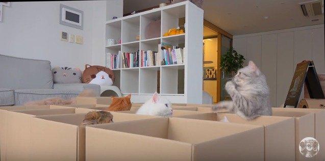 段ボールから顔を出す猫たち