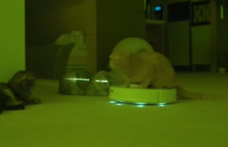 猫が乗ったルンバか光を放つ