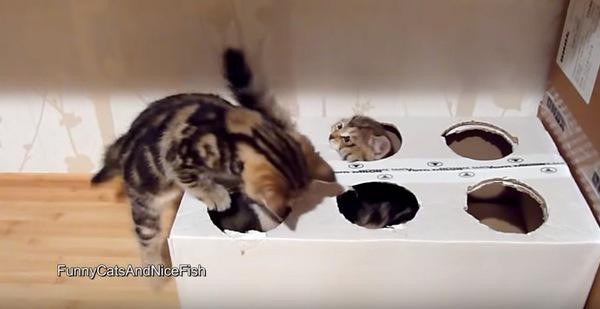 出たり入ったりする子猫