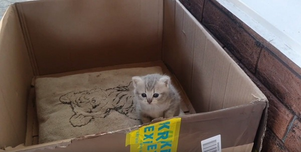 座り込む子猫