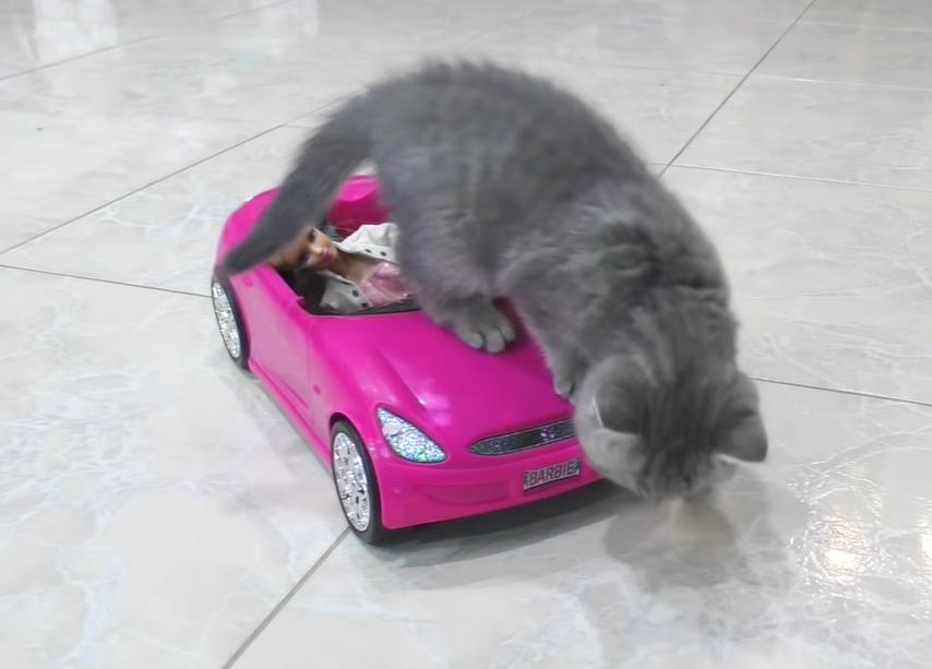 車の上に乗る子猫