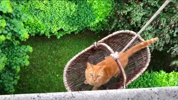 降ろされていく猫