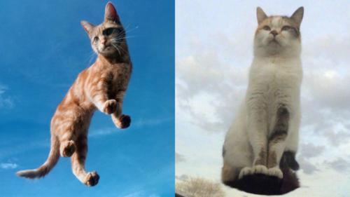 空中浮遊する猫