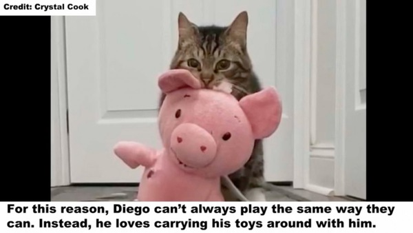 豚をくわえるディエゴ