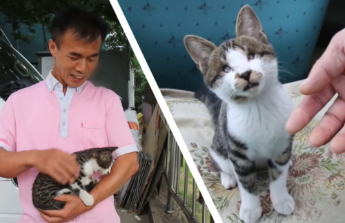 お父さんと子猫のヤン