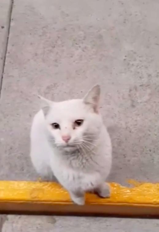 路地裏に立つ白い野良猫