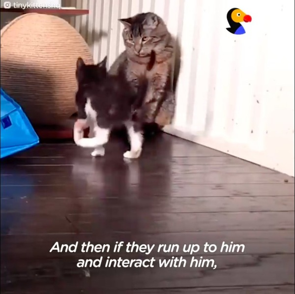 子猫と遊ぶメイソン