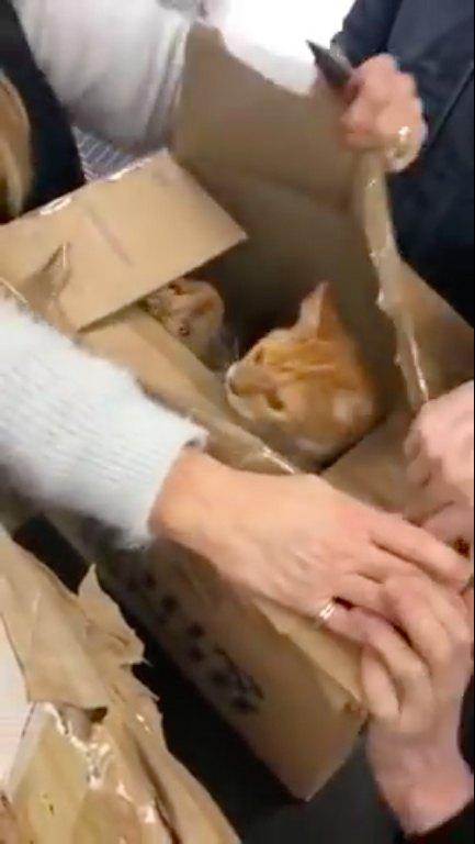 3箱目のダンボールの中に入っていた猫