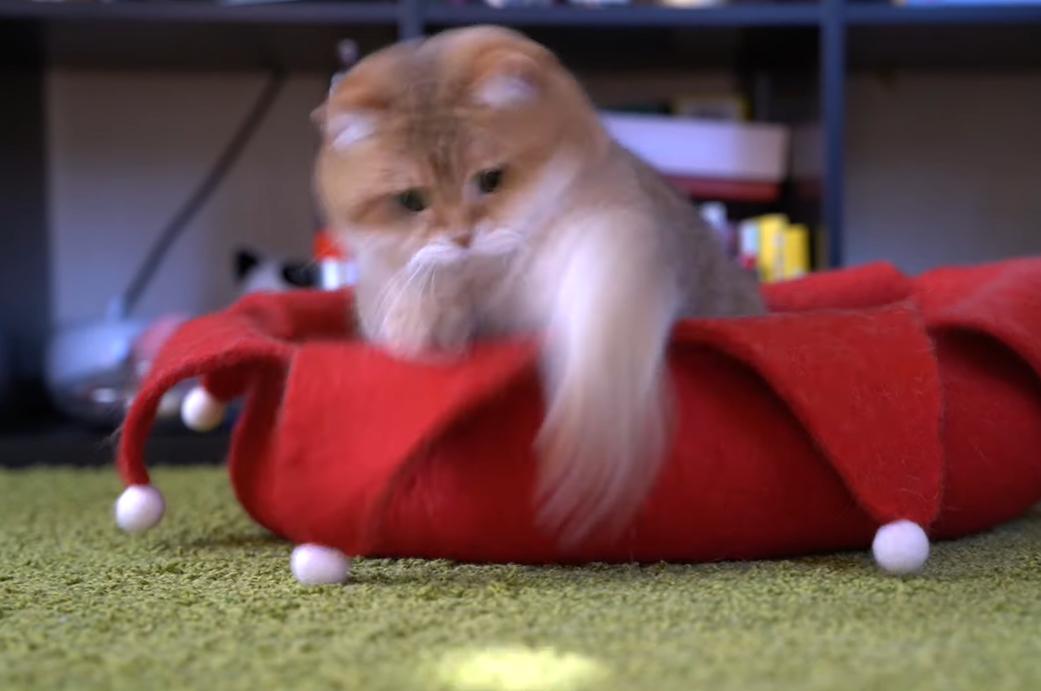 素早い動きをする猫