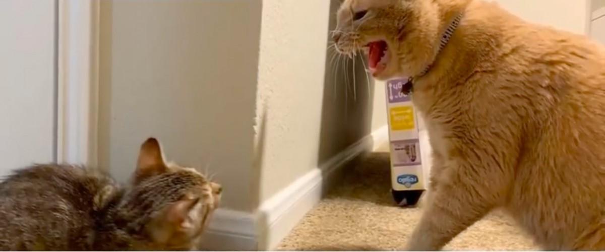同居猫のクライドと