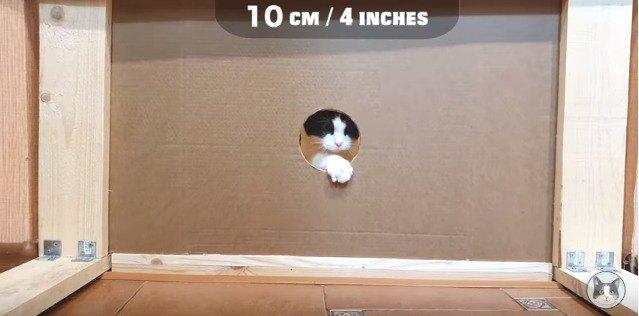 10cmの穴を通る猫