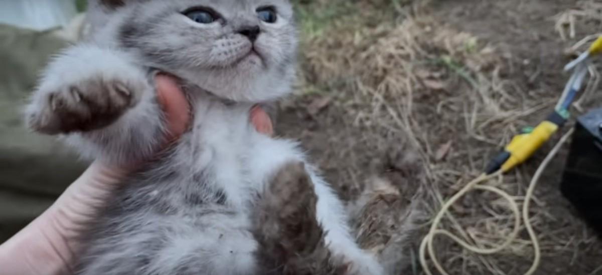 パイプから救助された子猫
