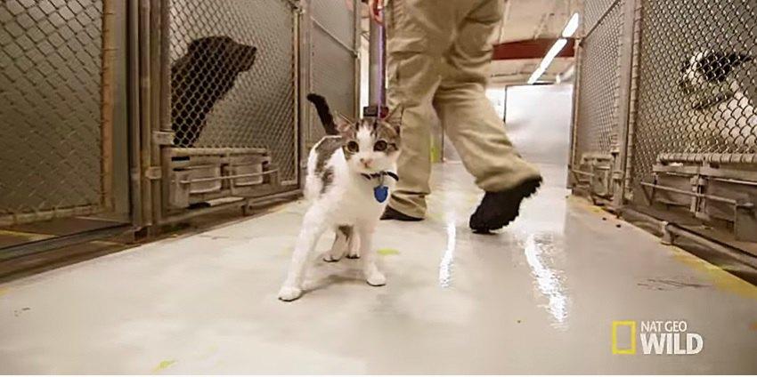 施設で働く猫のパンプキン