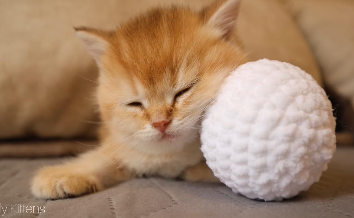 ボールとお昼寝中の子猫