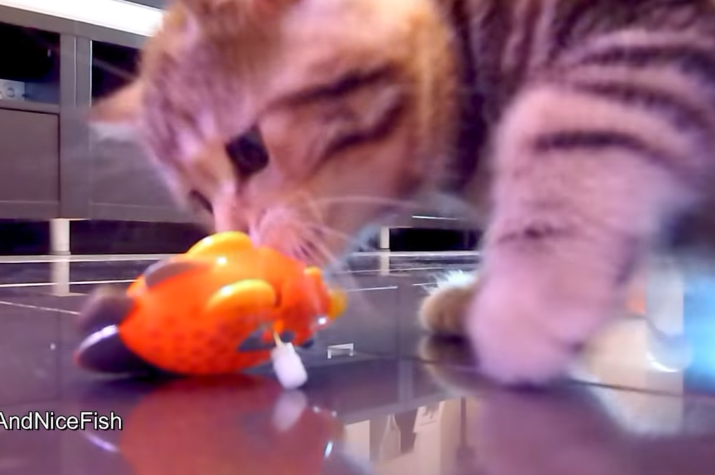 魚のおもちゃの匂いを嗅ぐ子猫