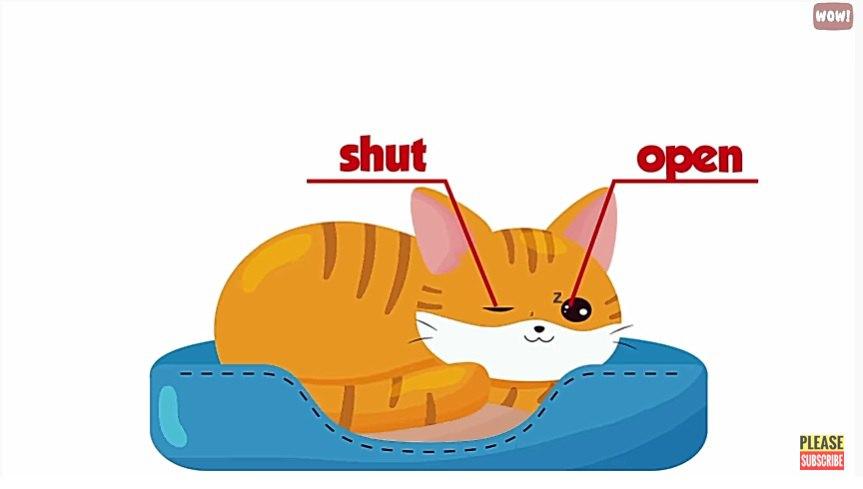猫の右脳左脳
