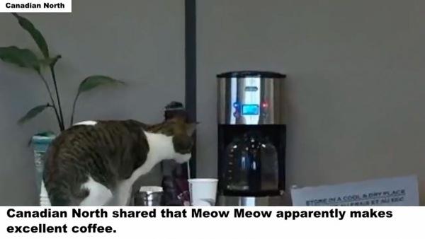 オフィスのコーヒーとミュウミュウ