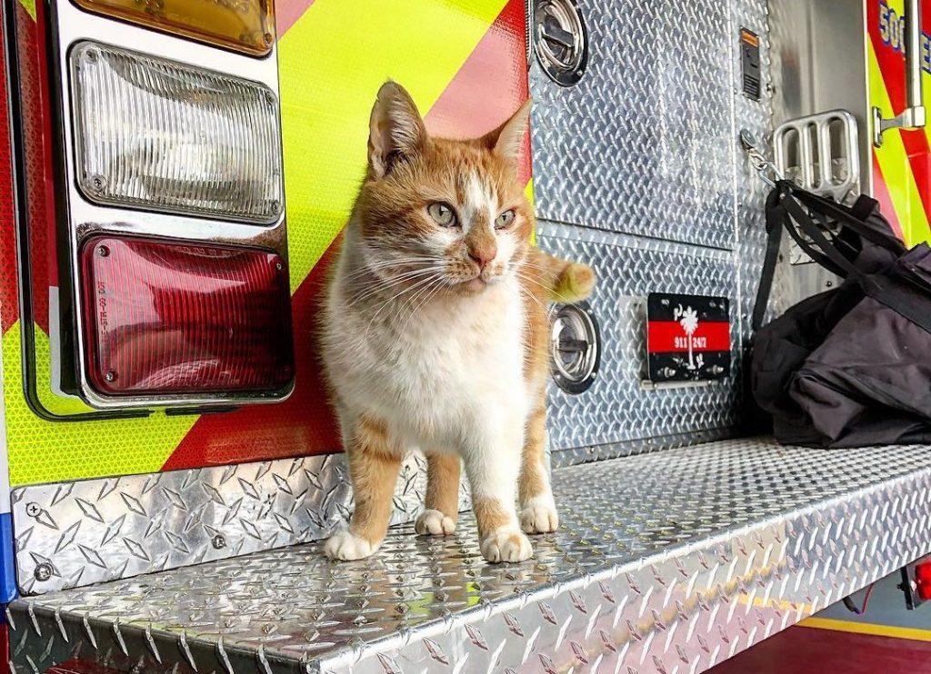 消防署にいる猫