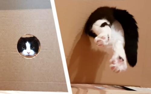 狭い穴を通ろうとする猫
