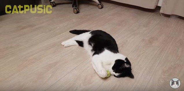 ボールに夢中な猫