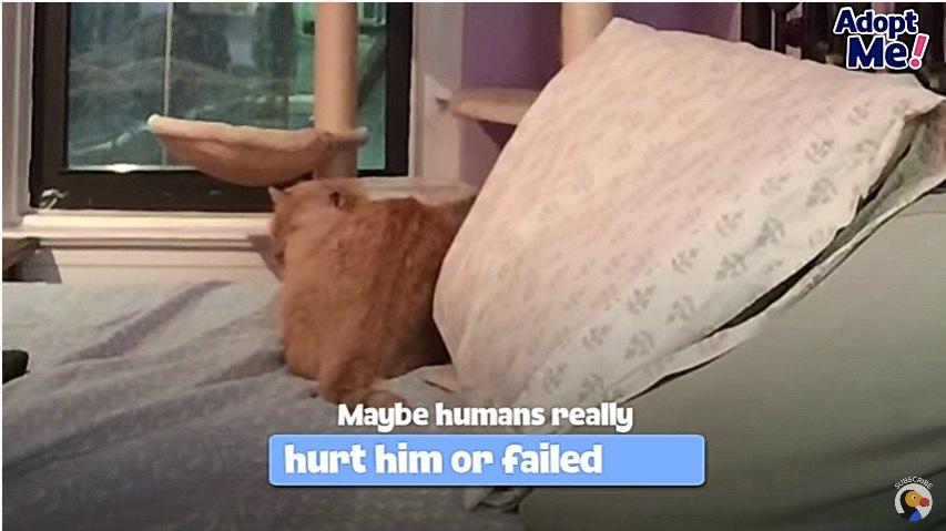 威嚇をする猫