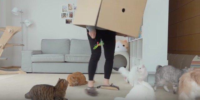 箱の周りに集まる猫