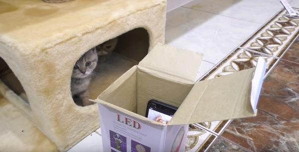 様子を覗う猫
