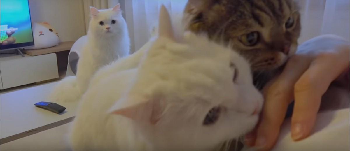鯖の匂いがする飼い主に興奮する猫たち
