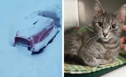 雪に埋もれたキャリーバッグの中から発見された猫