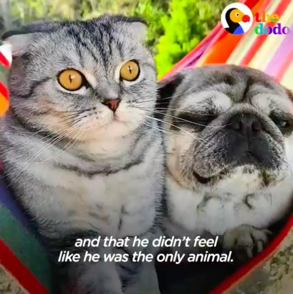 ハンモックに座る猫のルイジとパグ犬のバンディート