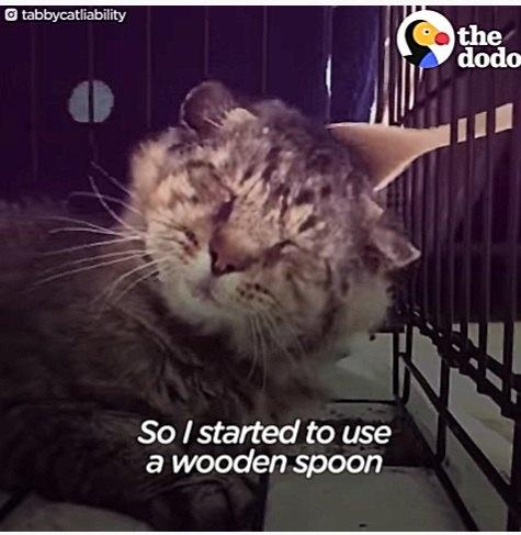 スプーンで撫でられる老猫
