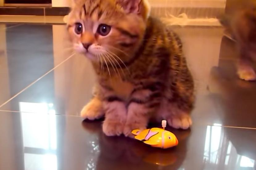 魚のおもちゃに飽きた子猫