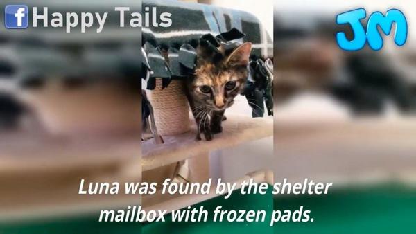 仲間の保護猫のルナ