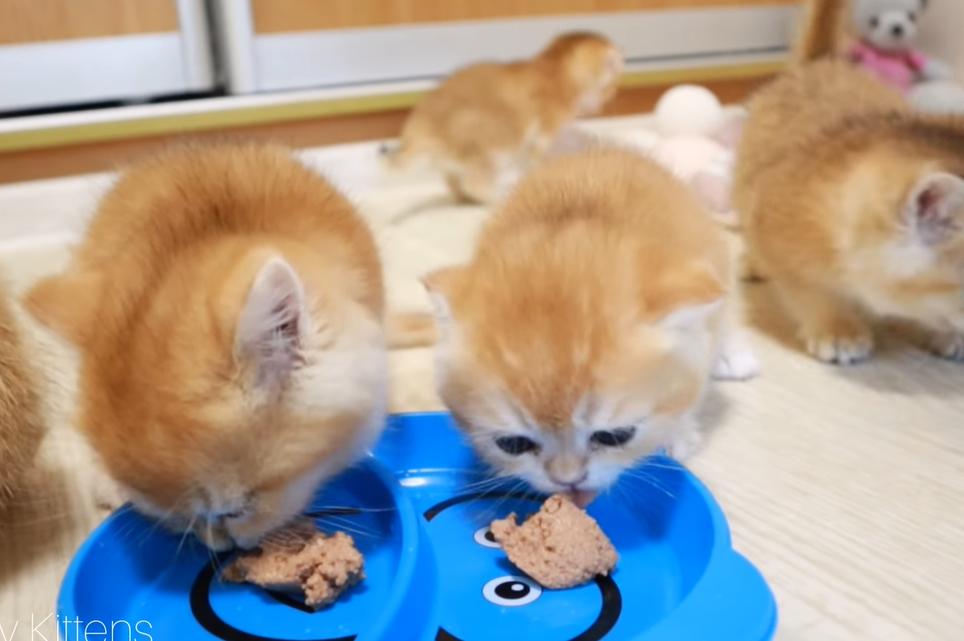 食欲が湧いてきた子猫