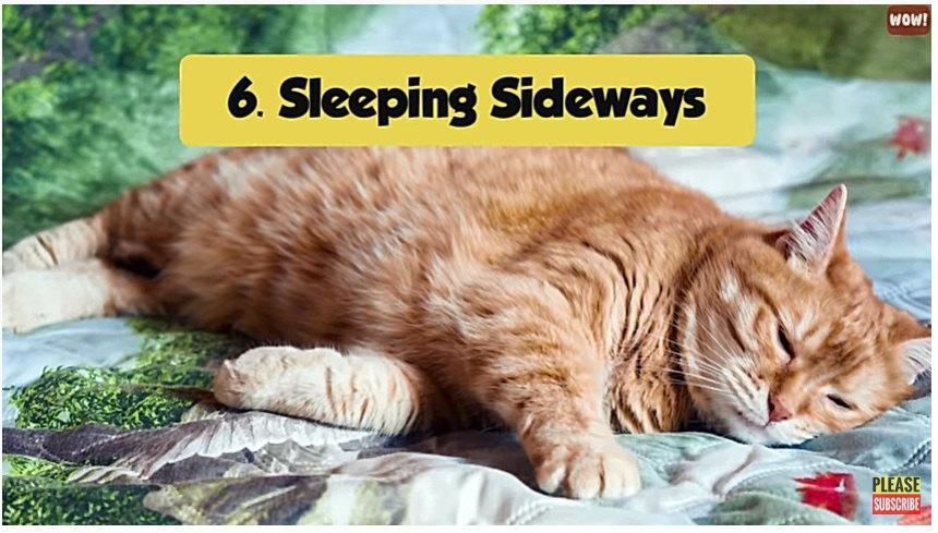 横になって寝る猫