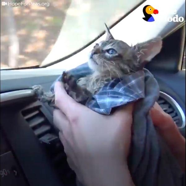 病院へ向かう子猫
